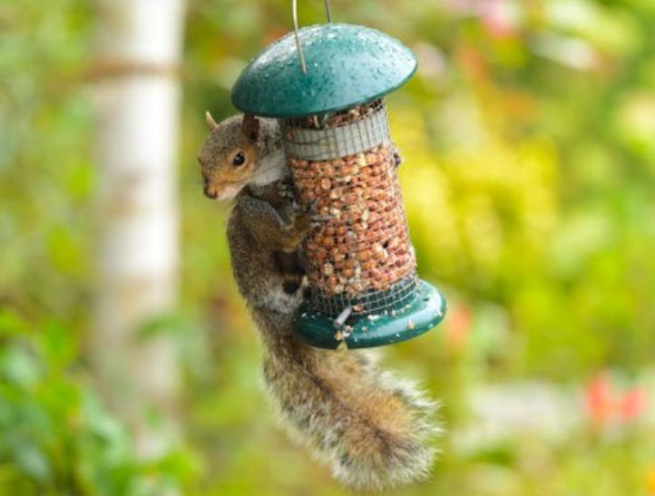 Treating Bird Feeders