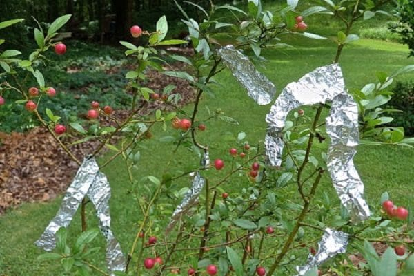 Branches With Aluminum Foil Wrapped Around Them