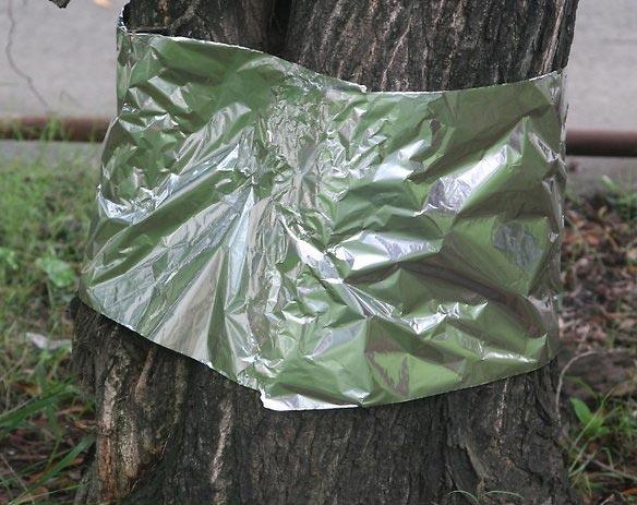Tree With Aluminum Foil Around It