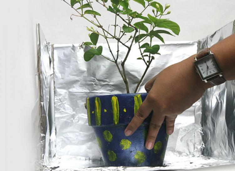Potted Plant Surrounded By Aluminum Foil