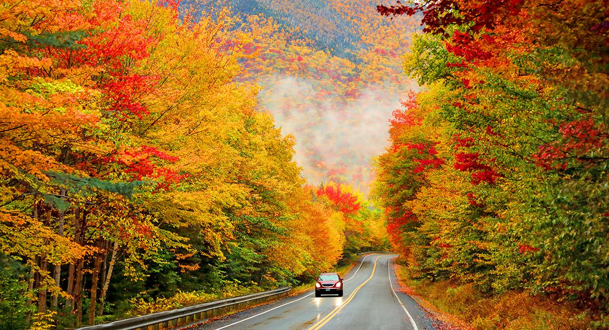 Foliage Road Trips